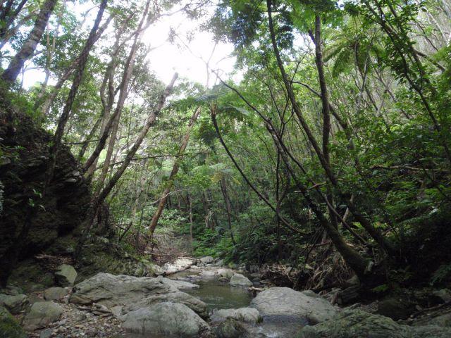素敵な森を守りましょう