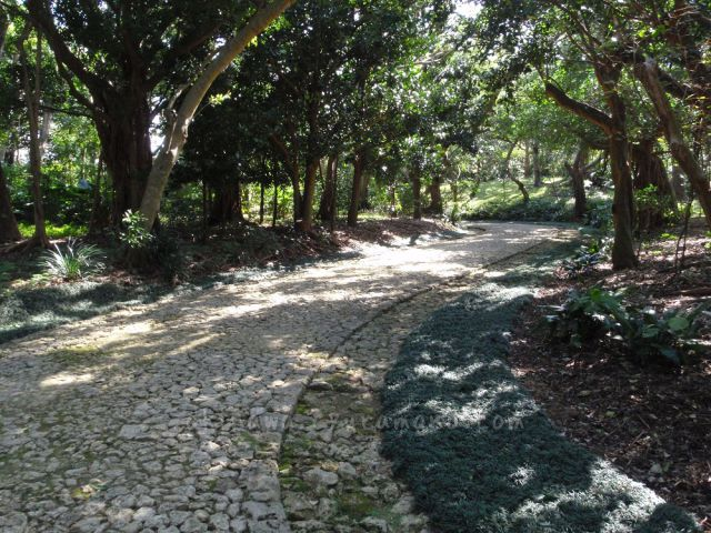 綺麗な石畳道