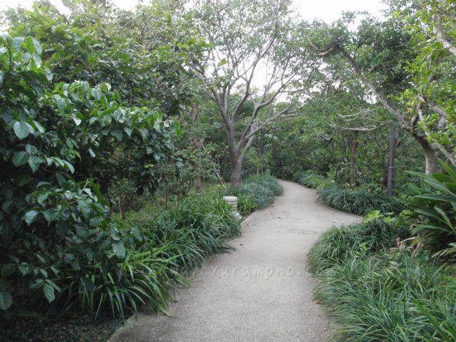 首里城公園の散歩道