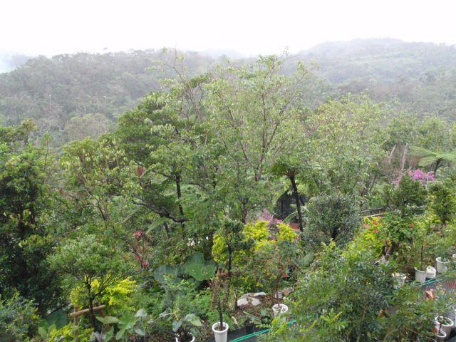 ヒカゲヘゴの森