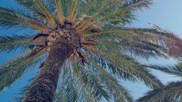沖縄産の代表的な植物