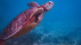 沖縄に生息する珍しい生物